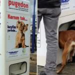 Pugedon, a vending machine de ração onde o pagamento é reciclagem